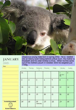 Buy a Calendar and help support a Koala